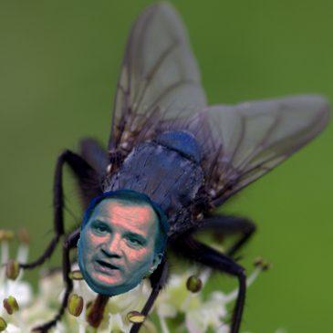 Sällskapliga flugor och politiker.